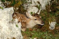 Gli animali di Matteo Venuti